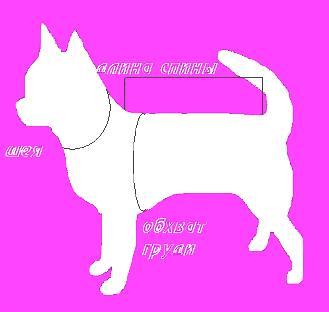 Измерение размера собаки на примере Чихуахуа